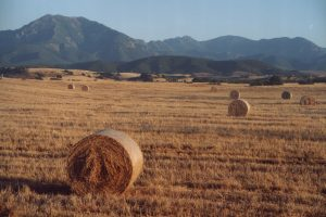 Life in the Italian countryside: Italian language lesson about pronomi relativi